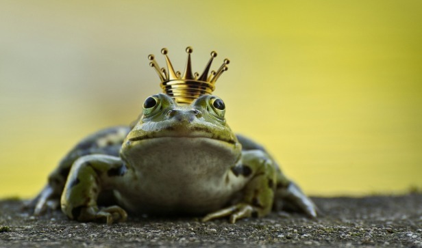 frog-2235629_960_720
