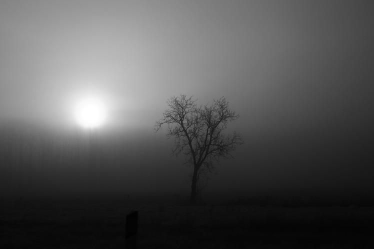 fog-1120935_960_720